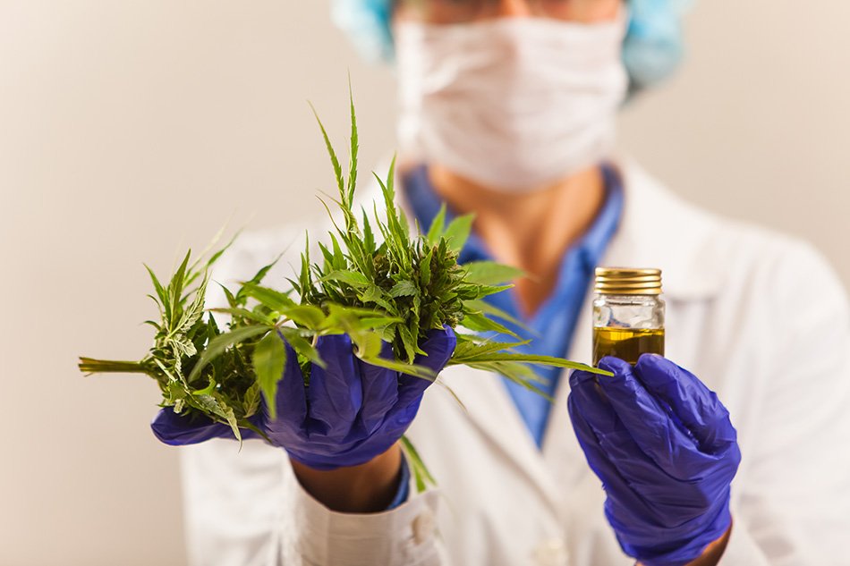 Tax credits and the cannabis industry: Lab technician wearing face mask and lab coat, protective gloves, holding cannabis plant and CDB oil sample